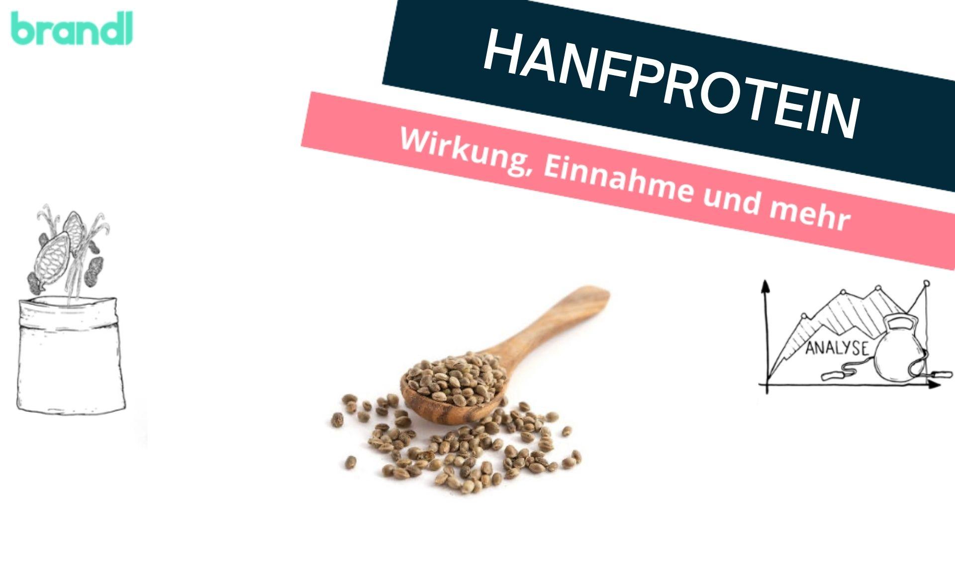 Hanfprotein – Das steckt in dem Trendprotein