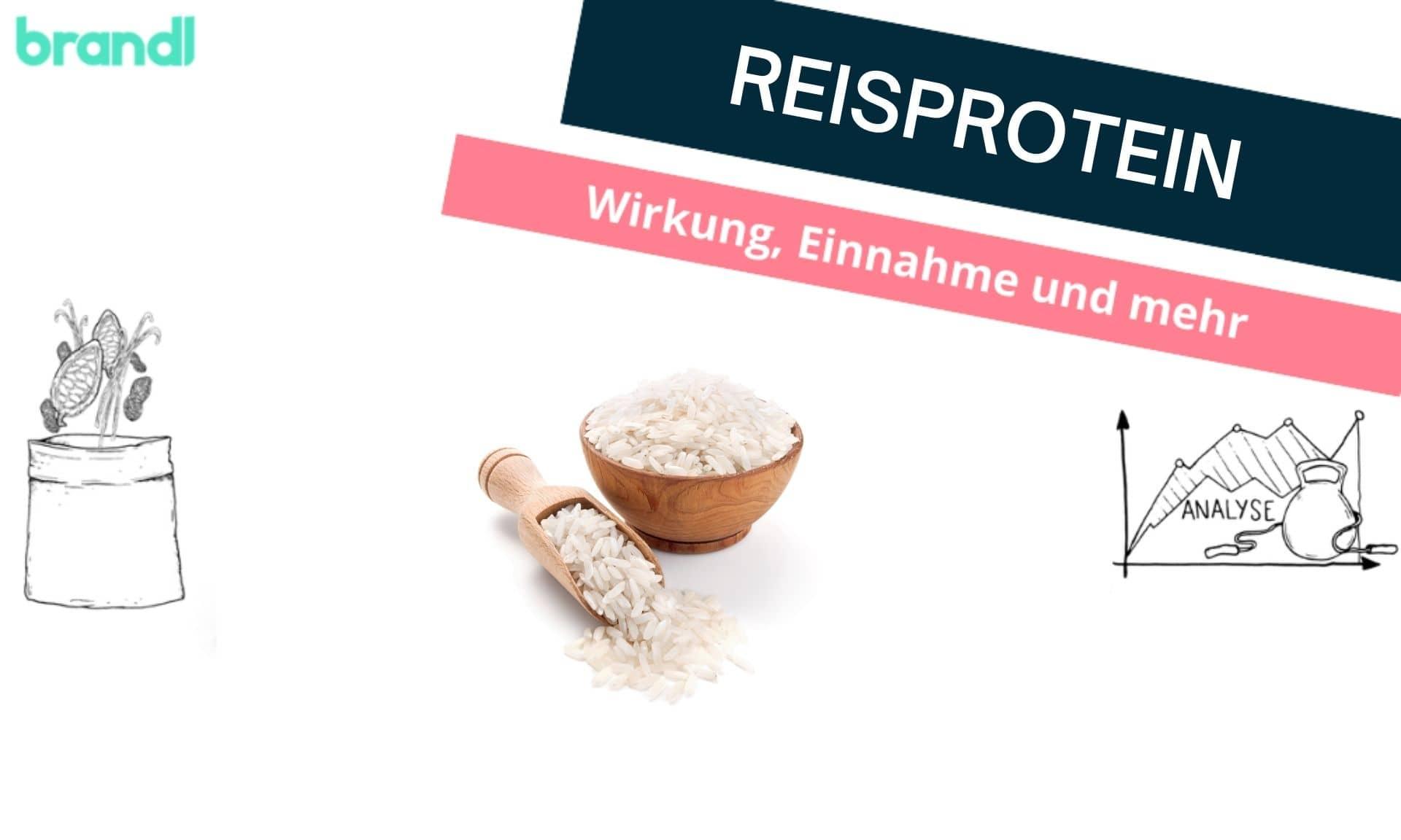 Reisprotein – 6 Fakten über eine unterschätzte Proteinquelle