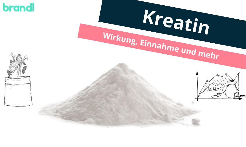 Kreatin (Creatin) Monohydrat – Was ist bei der Kreatin Einnahme und Wirkung zu beachten?